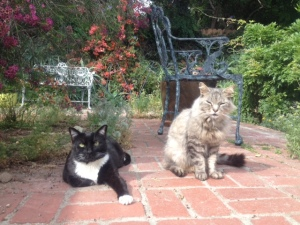 Bop (left) and Luna at age 10. Bop needs an attitude adjustment. Luna is an object of worship.