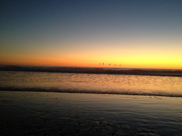 Pelicans at sunrise, Carlsbad Beach, San Diego County, CA