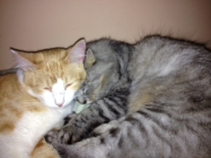 A new familiar sight - Luna napping with a youngster, in this case, Bo.