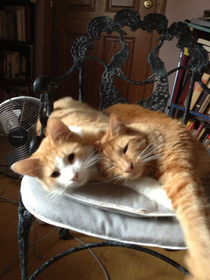 Bo and Leo hang out together but could not be more different. For Bo, life seems a series of disappointments, while Leo is gratitude incarnate: he purrs when you touch him; he purrs when he eats; he purrs as he walks around.