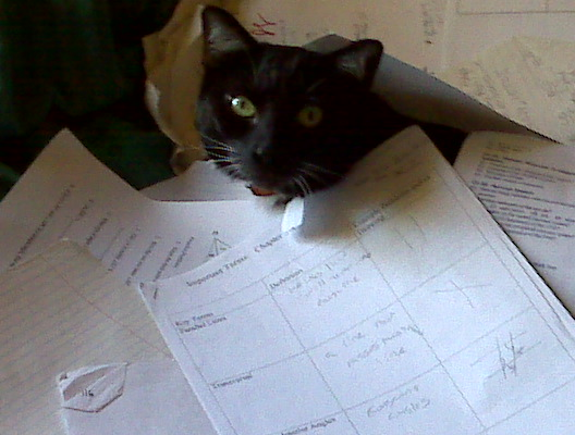 Bop loves to help me with chores such as organizing paperwork.