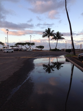 Hawaiianpuddle