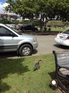 HawaiiBirdAway2014-03-09 14.07.21