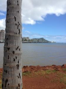 HawaiiDiamondHeadBugs2014-03-09 14.16.30