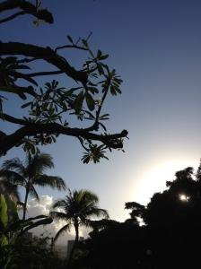 HawaiiPlumeriaTree2014-03-10 07.38.46