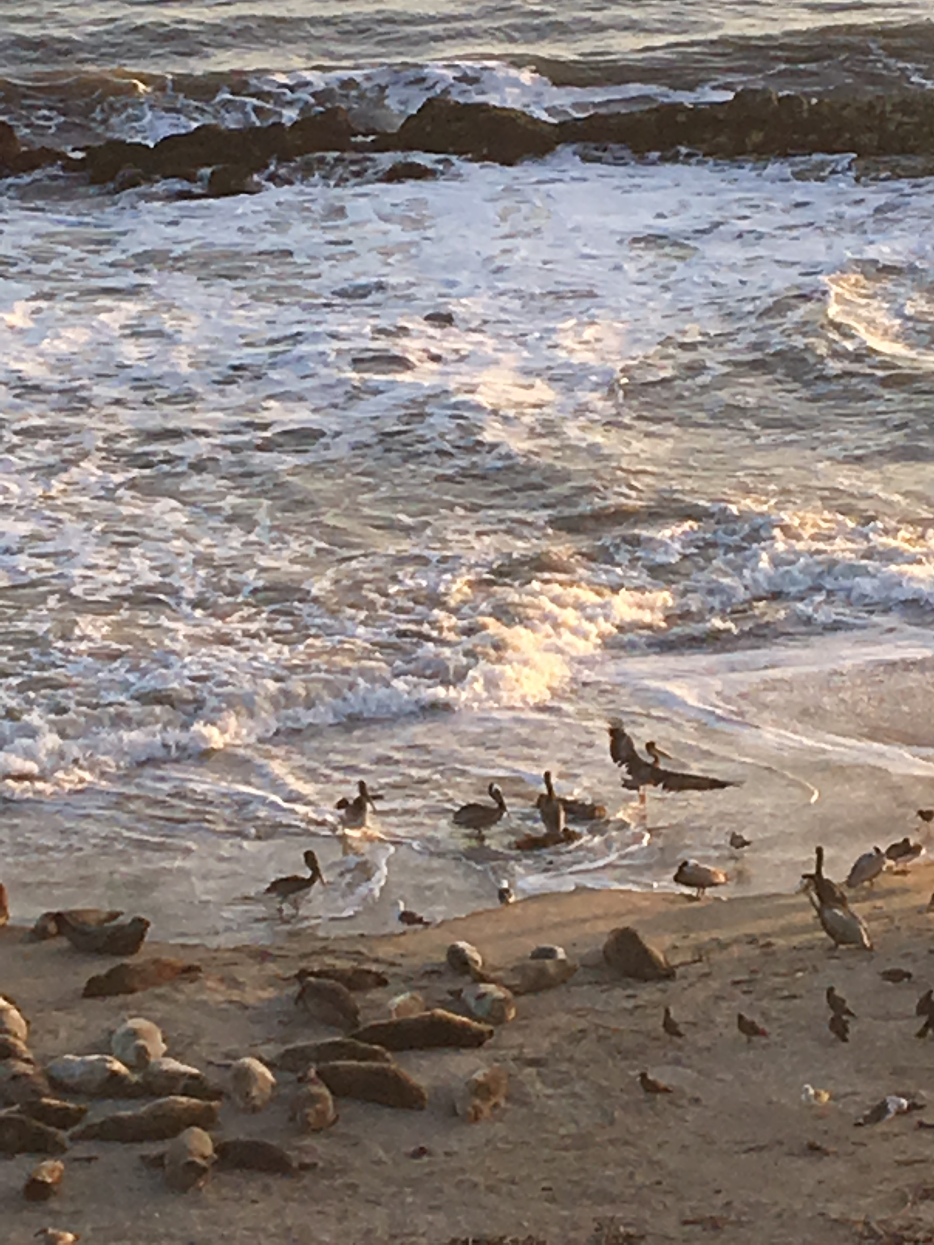 pelicanssunsetIMG_6329